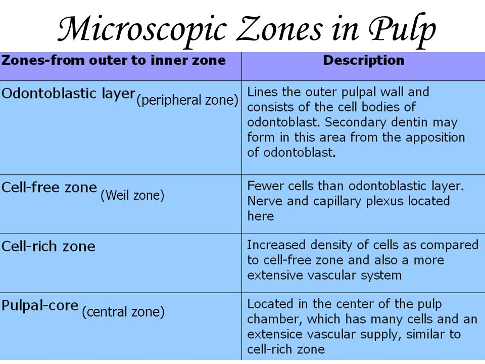 Microscopic Zones in Pulp (peripheral zone) (central zone) (Weil zone)