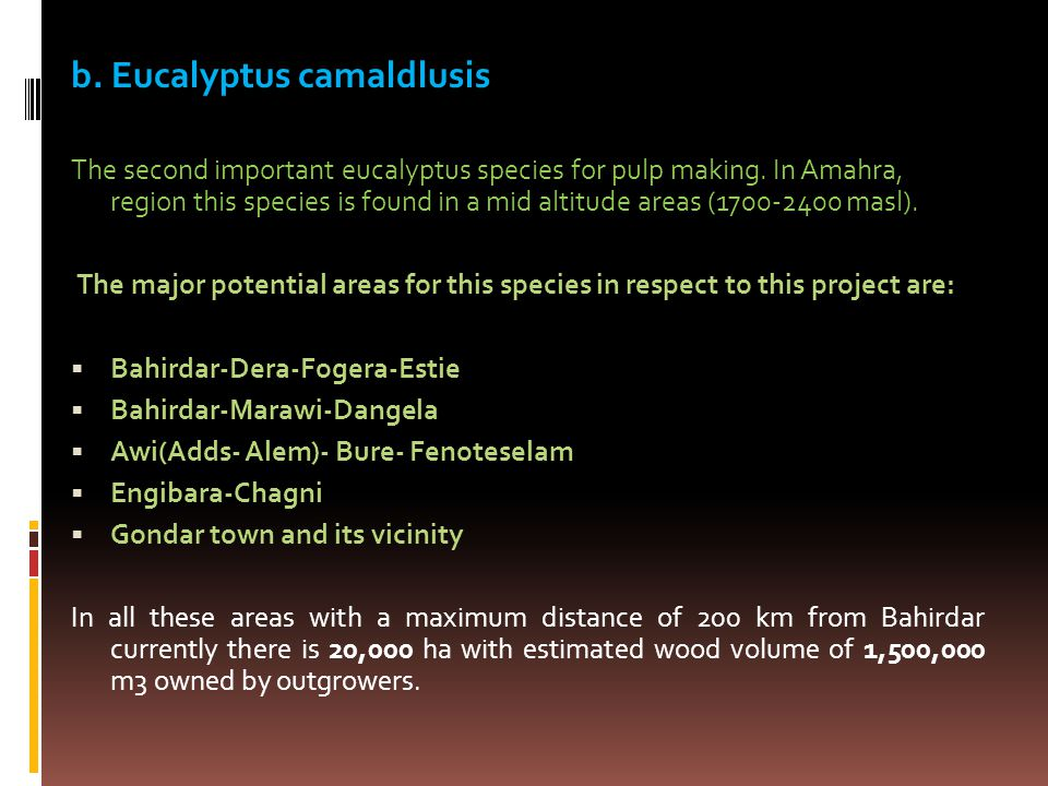 b. Eucalyptus camaldlusis The second important eucalyptus species for pulp making.