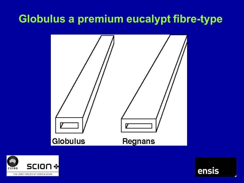 Globulus a premium eucalypt fibre-type