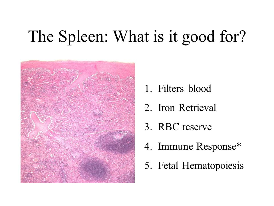 The Spleen: What is it good for.