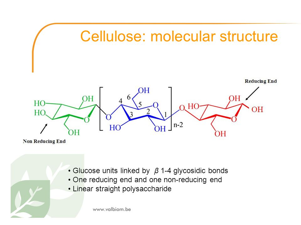 Cellulose: molecular structure Glucose units linked by β 1-4 glycosidic bonds One reducing end and one non-reducing end Linear straight polysaccharide