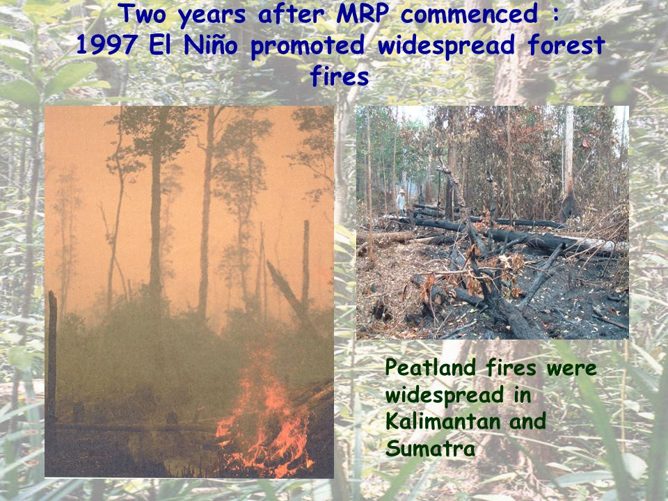Carbon Emissions from Peatland Fires Carbon losses from Indonesian peatland fires during 1997/98: – Estimated 0.81 – 2.57 Gt C [Page et al.