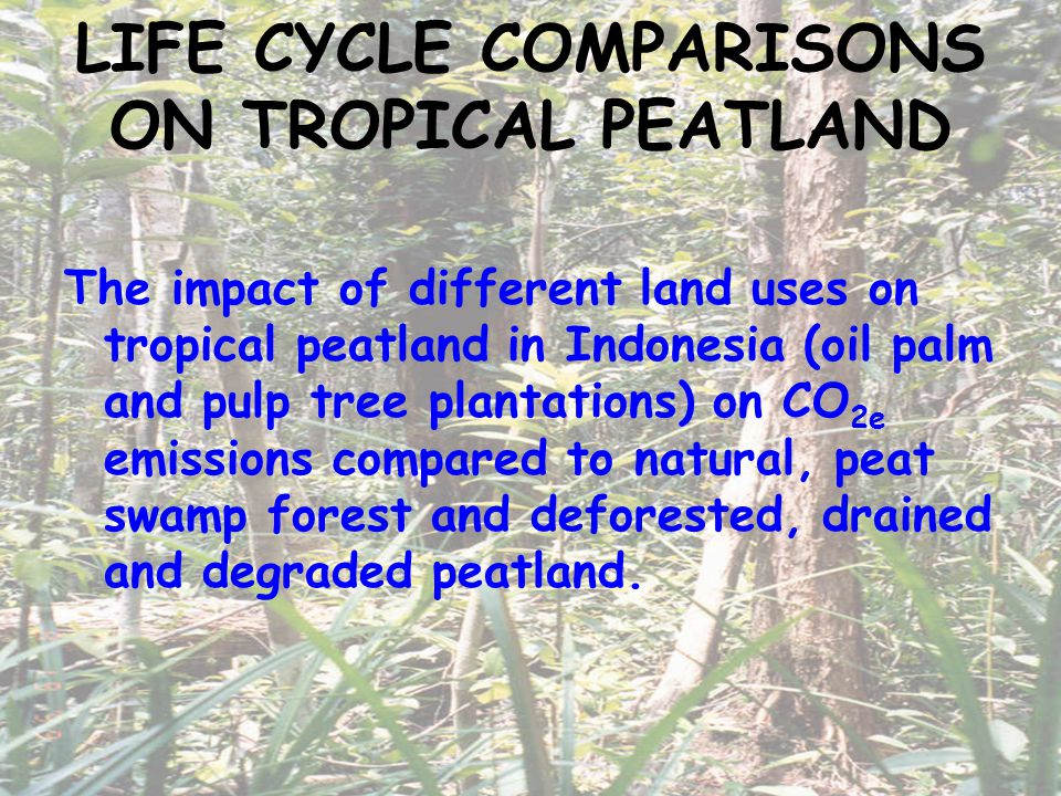 LIFE CYCLE COMPARISONS ON TROPICAL PEATLAND The impact of different land uses on tropical peatland in Indonesia (oil palm and pulp tree plantations) on CO 2e emissions compared to natural, peat swamp forest and deforested, drained and degraded peatland.