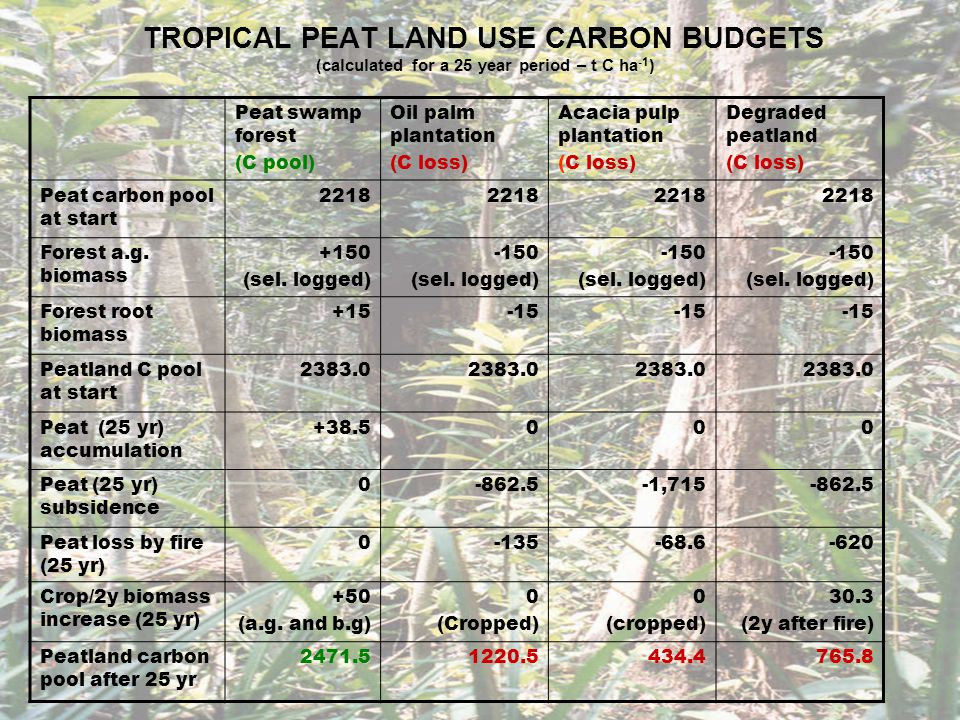 TROPICAL PEAT LAND USE CARBON BUDGETS (calculated for a 25 year period – t C ha -1 ) Peat swamp forest (C pool) Oil palm plantation (C loss) Acacia pulp plantation (C loss) Degraded peatland (C loss) Peat carbon pool after 25 yr 2471.51220.5434.4765.8 C imbalance with PSF 0-1251.0-2037.1-1705.7 Carbon gain/loss over 25 yr +88.5-1162.5-1948.6-1617.2 Mean annual C gain/loss +3.54-46.5 (inc.