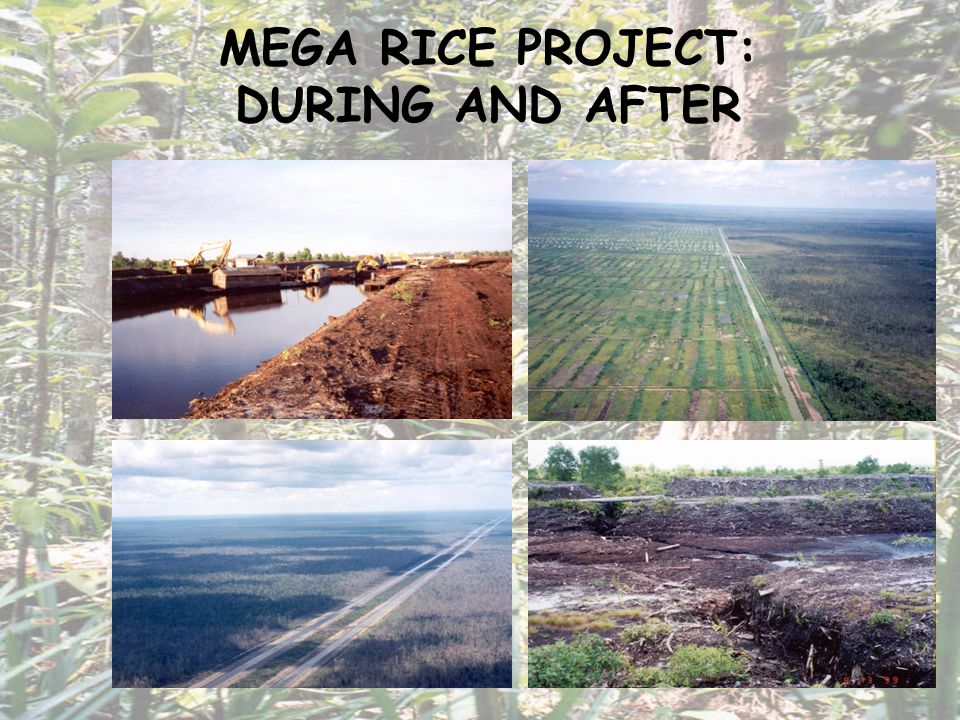 FORMER MEGA RICE PROJECT SEPTEMBER 2002 There have been some problems!