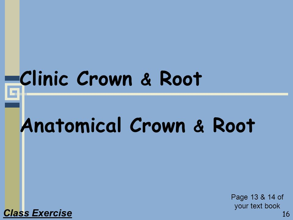 16 Clinic Crown & Root Anatomical Crown & Root Class Exercise Page 13 & 14 of your text book
