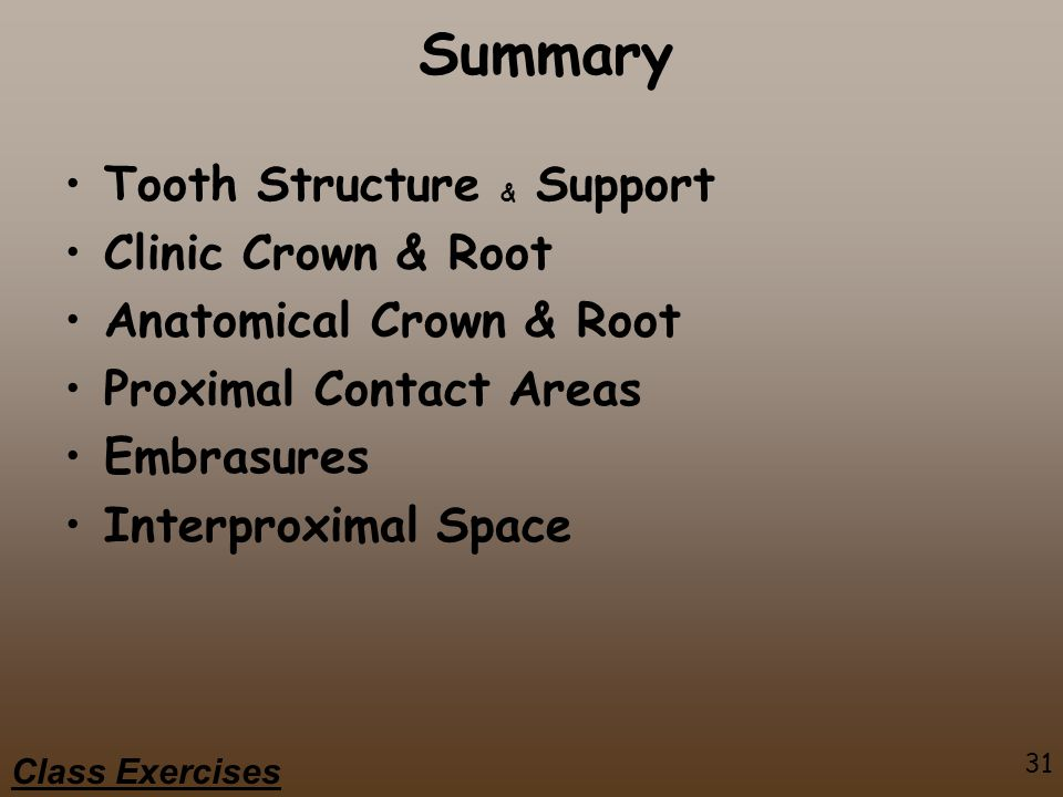 31 Class Exercises Summary Tooth Structure & Support Clinic Crown & Root Anatomical Crown & Root Proximal Contact Areas Embrasures Interproximal Space