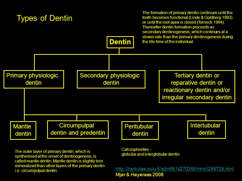 Types of Dentin Dentin Primary physiologic dentin Secondary physiologic dentin Tertiary dentin or reparative dentin or reactionary dentin and/or irreg
