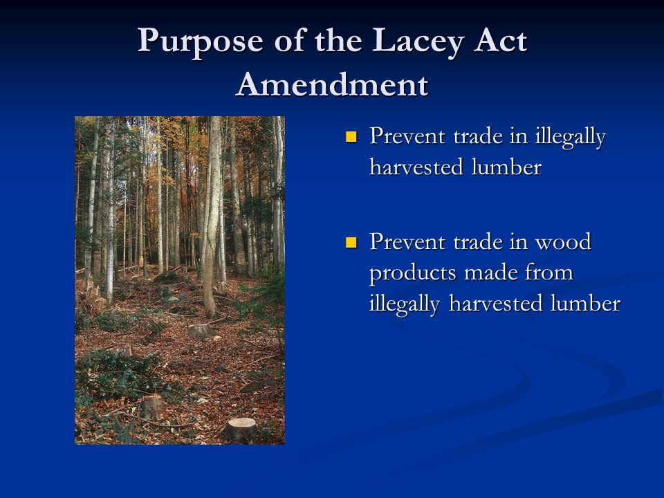 Purpose of the Lacey Act Amendment Prevent trade in illegally harvested lumber Prevent trade in illegally harvested lumber Prevent trade in wood products made from illegally harvested lumber Prevent trade in wood products made from illegally harvested lumber