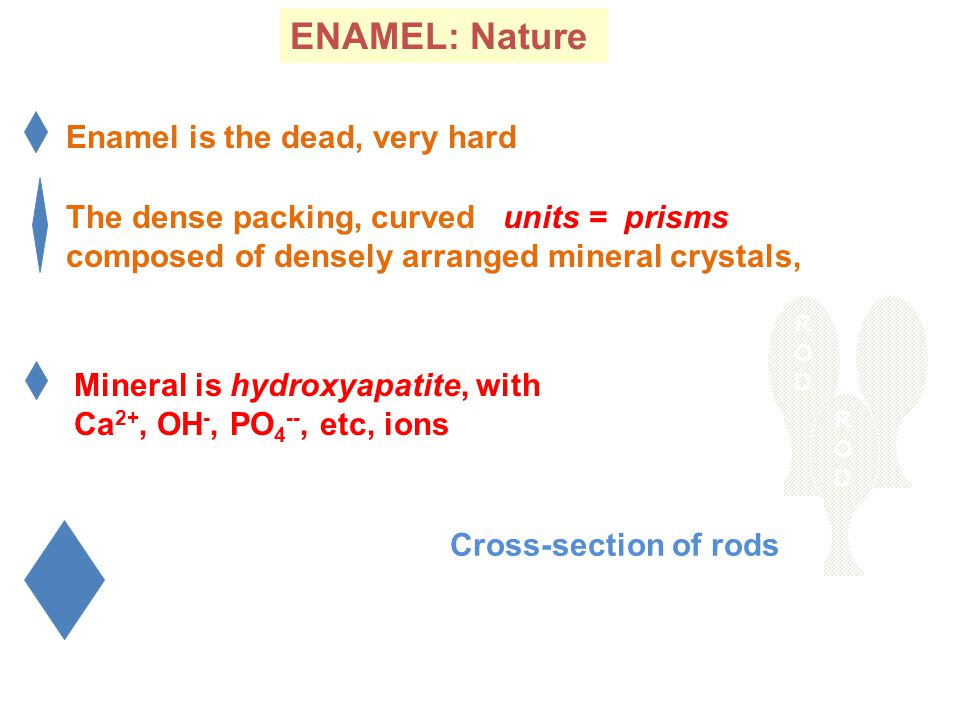 ENAMEL: Nature Enamel is the dead, very hard The dense packing, curved units = prisms composed of densely arranged mineral crystals, RODROD RODROD Mineral is hydroxyapatite, with Ca 2+, OH -, PO 4 --, etc, ions Cross-section of rods