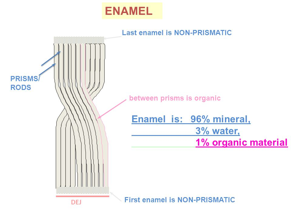 ENAMEL DEJ PRISMS/ RODS between prisms is organic Enamel is: 96% mineral, 3% water, 1% organic material First enamel is NON-PRISMATIC Last enamel is NON-PRISMATIC
