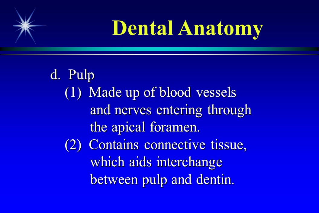 d. Pulp (1) Made up of blood vessels and nerves entering through the apical foramen. (1) Made up of blood vessels and nerves entering through the apic
