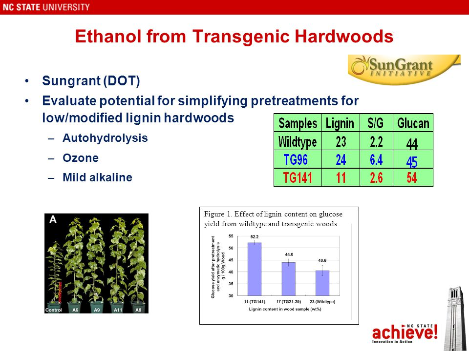 Ethanol from Transgenic Hardwoods Sungrant (DOT) Evaluate potential for simplifying pretreatments for low/modified lignin hardwoods –Autohydrolysis –Ozone –Mild alkaline Figure 1.