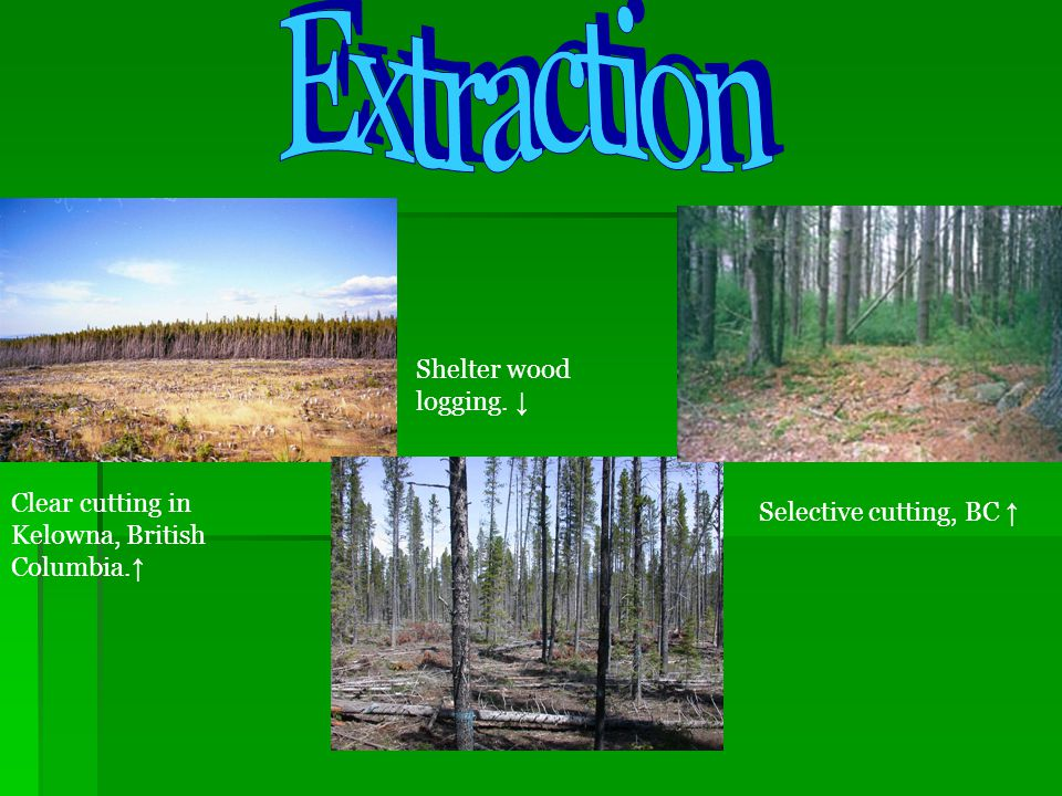 EXTRACTION COMPARISON Harvesting Process Ease of Logging CostEcologicalProtection Clear Cutting Shelterwood logging Selective Cutting Use page 314-315 to complete this chart