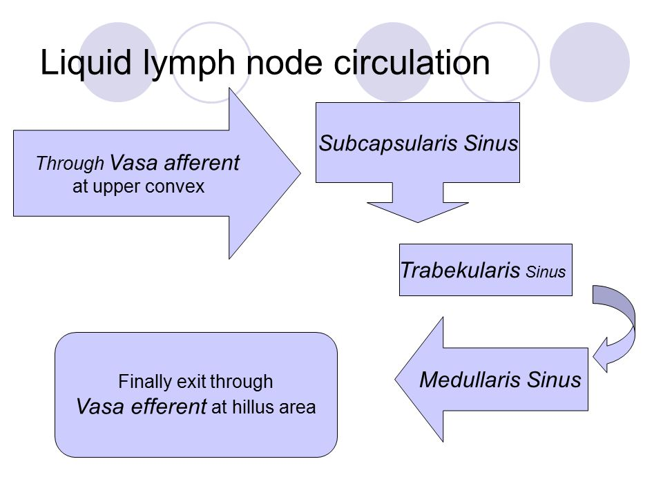 Through Vasa afferent at upper convex Subcapsularis Sinus Trabekularis Sinus Medullaris Sinus Finally exit through Vasa efferent at hillus area Liquid lymph node circulation