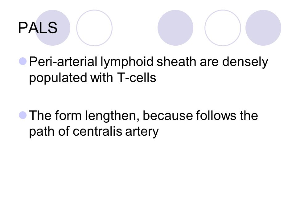 PALS Peri-arterial lymphoid sheath are densely populated with T-cells The form lengthen, because follows the path of centralis artery