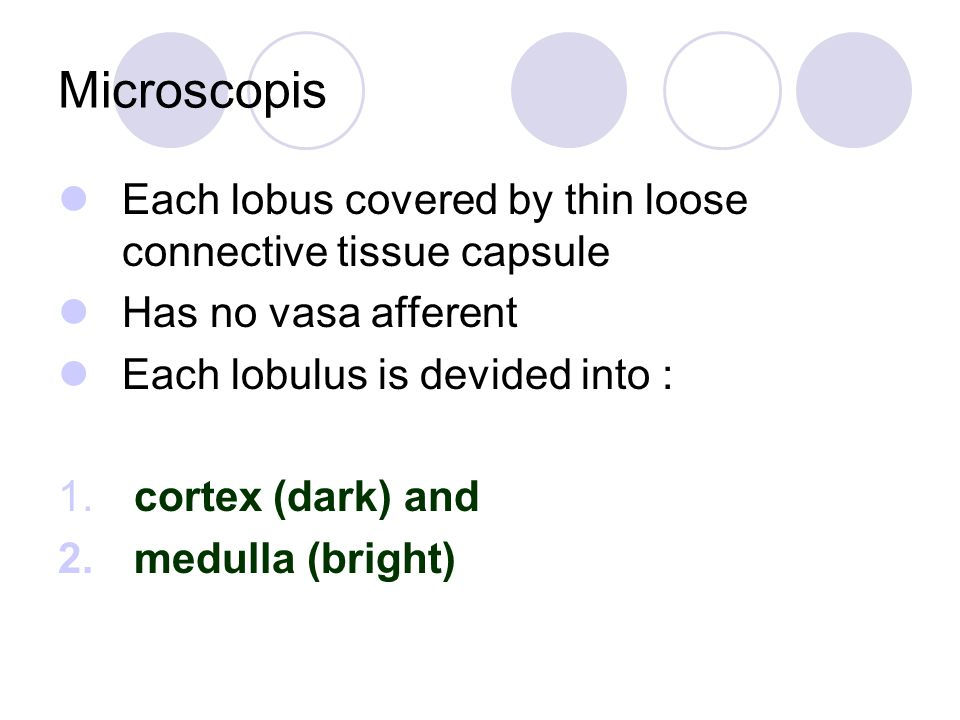 Microscopis Each lobus covered by thin loose connective tissue capsule Has no vasa afferent Each lobulus is devided into : 1.