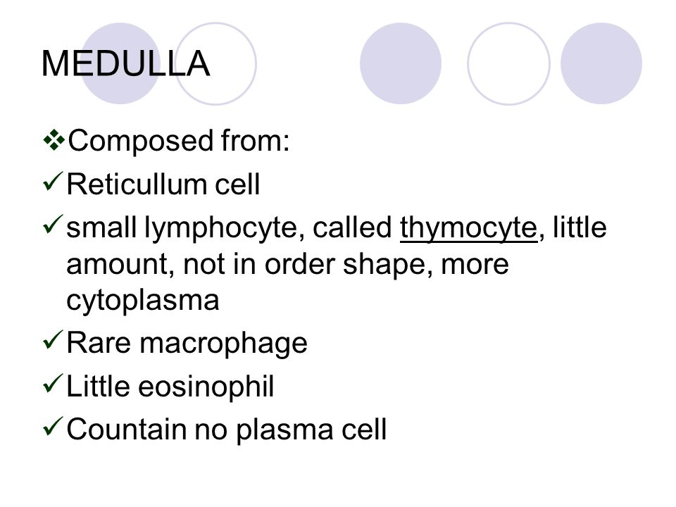 MEDULLA  Composed from: Reticullum cell small lymphocyte, called thymocyte, little amount, not in order shape, more cytoplasma Rare macrophage Little eosinophil Countain no plasma cell