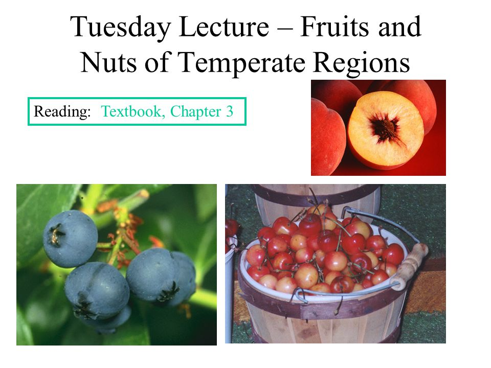 Fleshy Fruits from 1 Ovary - Berry Berry – multiple seeds, embedded in fleshy pulp Special types of Berries Pepo – hard rind Hesperidium – flesh = juice- filled hairs