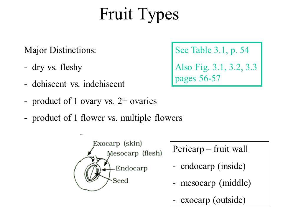 Fruit Types Major Distinctions: - dry vs. fleshy - dehiscent vs. indehiscent - product of 1 ovary vs. 2+ ovaries - product of 1 flower vs. multiple fl