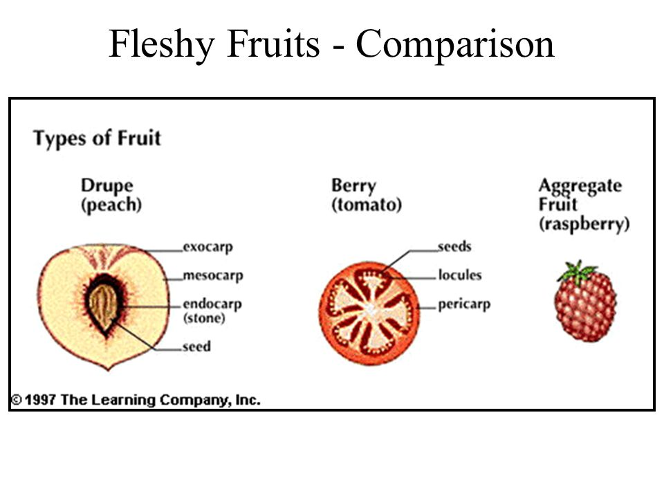 Fleshy Fruits - Comparison
