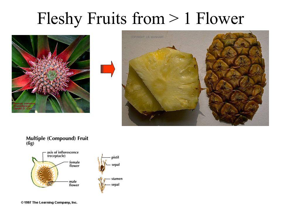 Fleshy Fruits from > 1 Flower
