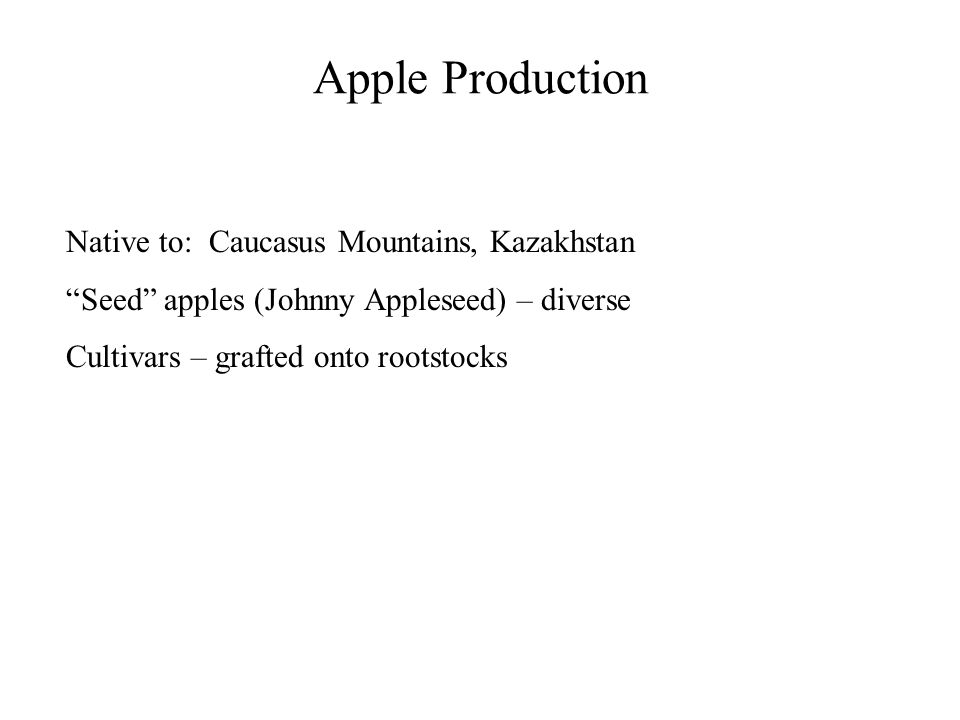"""Apple Production Native to: Caucasus Mountains, Kazakhstan """"Seed"""" apples (Johnny Appleseed) – diverse Cultivars – grafted onto rootstocks"""