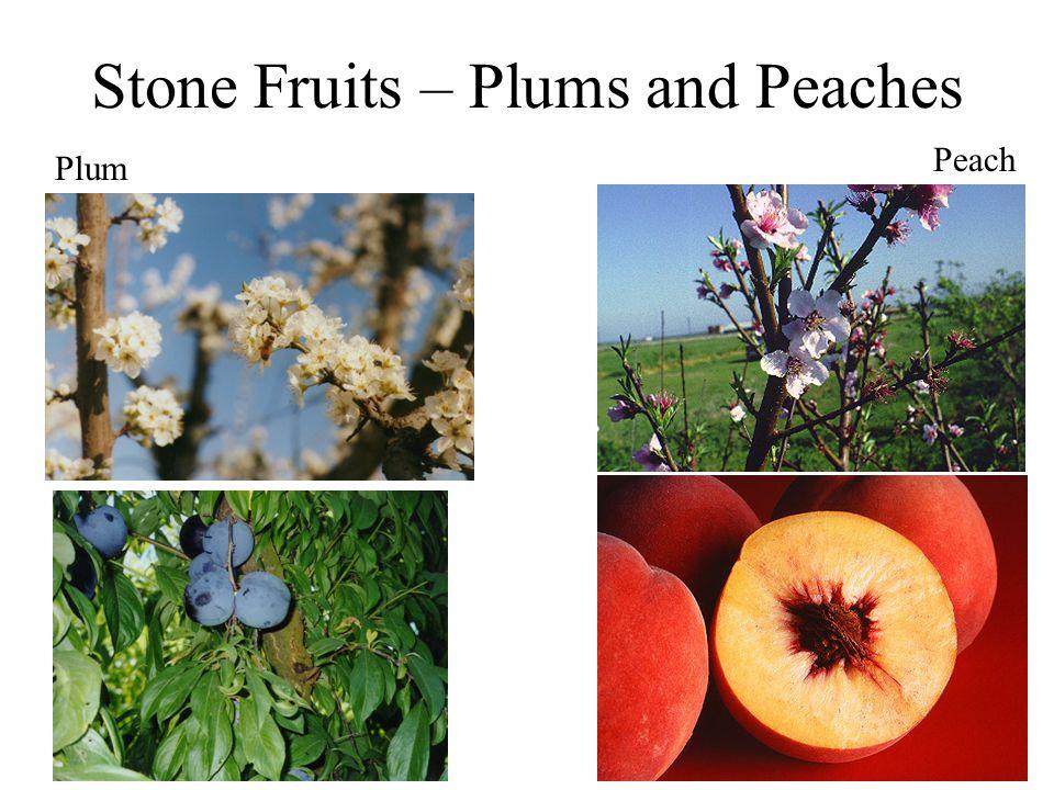 Stone Fruits – Plums and Peaches Plum Peach