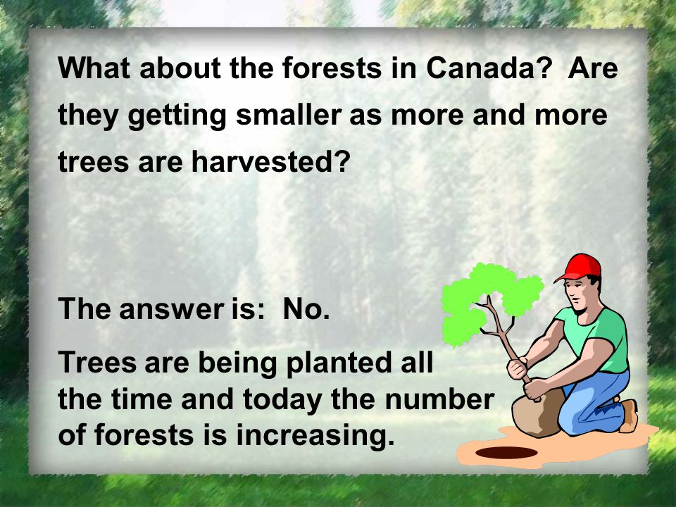 What about the forests in Canada. Are they getting smaller as more and more trees are harvested.