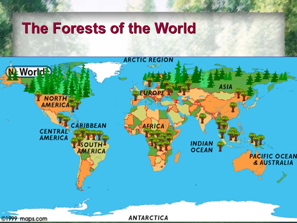 The Forests of the World