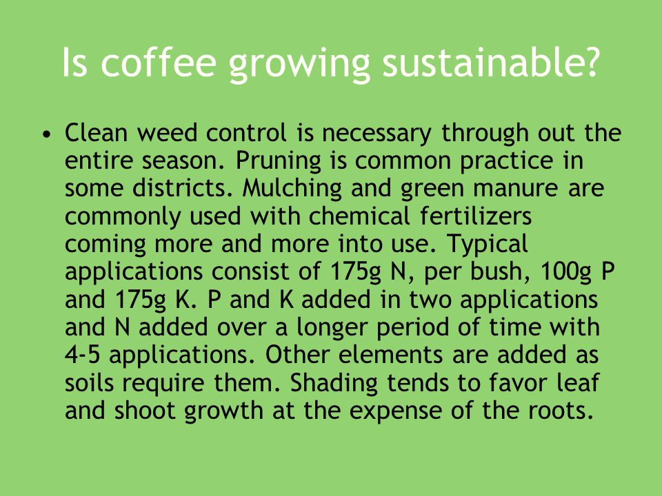 Is coffee growing sustainable. Clean weed control is necessary through out the entire season.