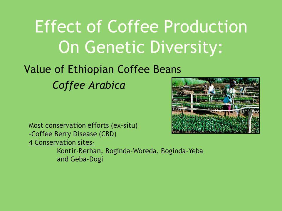 Effect of Coffee Production On Genetic Diversity: Value of Ethiopian Coffee Beans Coffee Arabica Most conservation efforts (ex-situ) -Coffee Berry Disease (CBD) 4 Conservation sites- Kontir-Berhan, Boginda-Woreda, Boginda-Yeba and Geba-Dogi