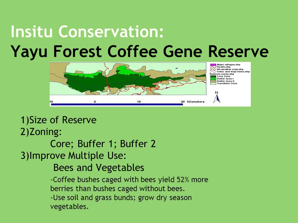 Insitu Conservation: Yayu Forest Coffee Gene Reserve 1)Size of Reserve 2)Zoning: Core; Buffer 1; Buffer 2 3)Improve Multiple Use: Bees and Vegetables -Coffee bushes caged with bees yield 52% more berries than bushes caged without bees.