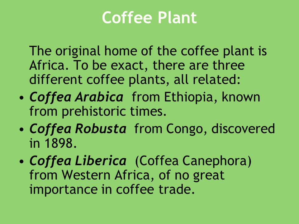 Coffee Plant The original home of the coffee plant is Africa.