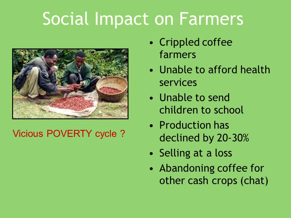Social Impact on Farmers Crippled coffee farmers Unable to afford health services Unable to send children to school Production has declined by 20-30% Selling at a loss Abandoning coffee for other cash crops (chat) Vicious POVERTY cycle ?