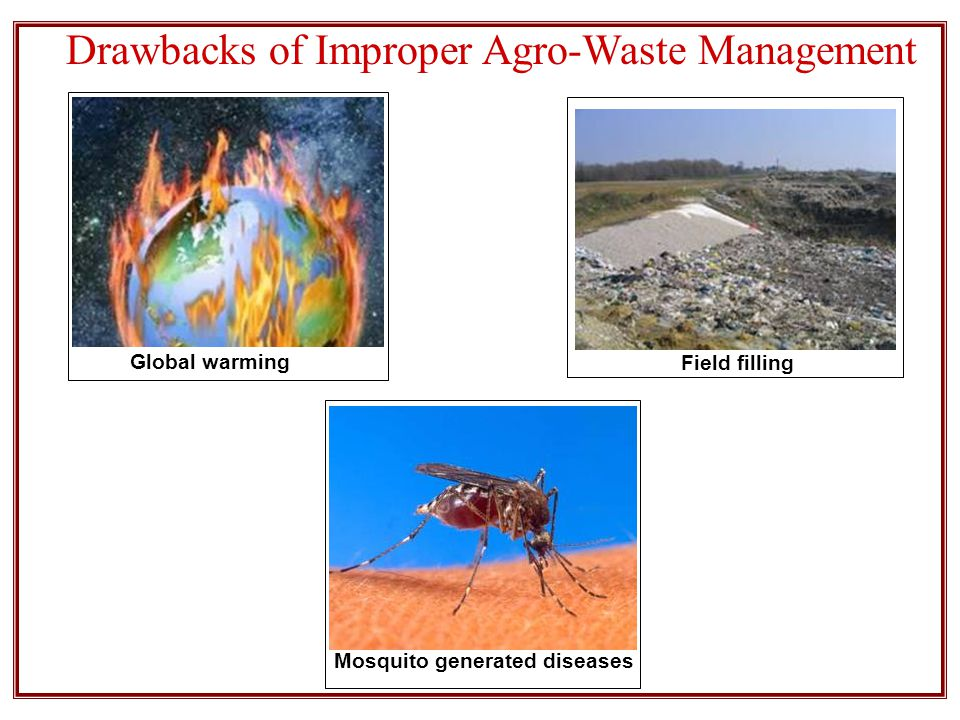 Drawbacks of Improper Agro-Waste Management Global warming Field filling Mosquito generated diseases