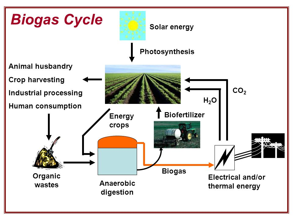 Electrical and/or thermal energy Biofertilizer Organic wastes Anaerobic digestion Biogas Solar energy Animal husbandry Crop harvesting Industrial processing Human consumption Photosynthesis H2OH2O CO 2 Biogas Cycle Energy crops
