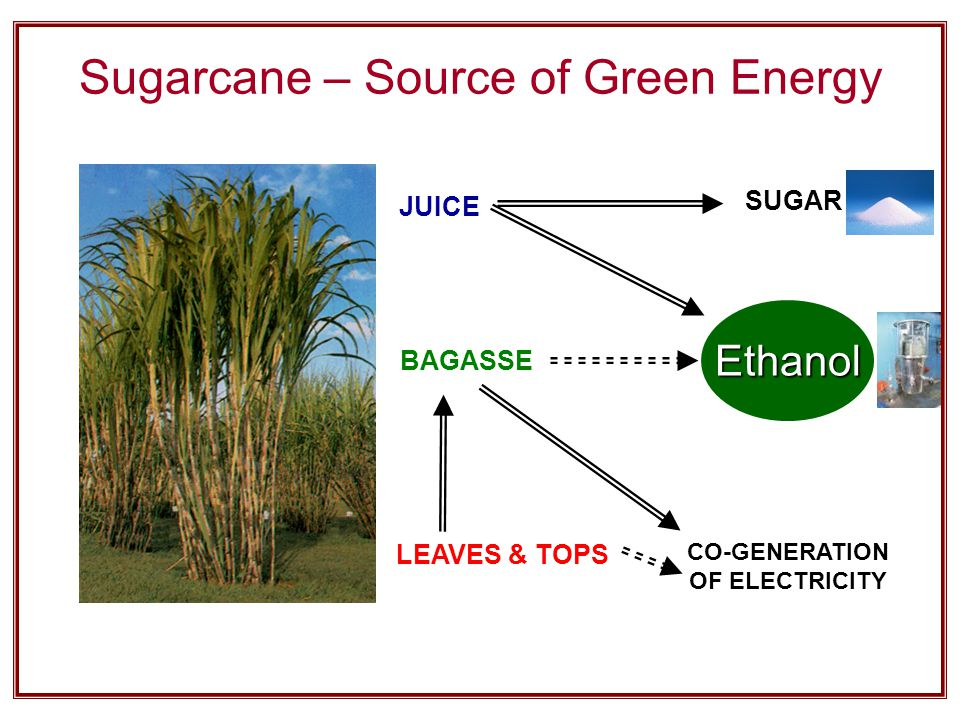 Sugarcane – Source of Green Energy JUICE BAGASSE LEAVES & TOPS SUGAR CO-GENERATION OF ELECTRICITY Ethanol