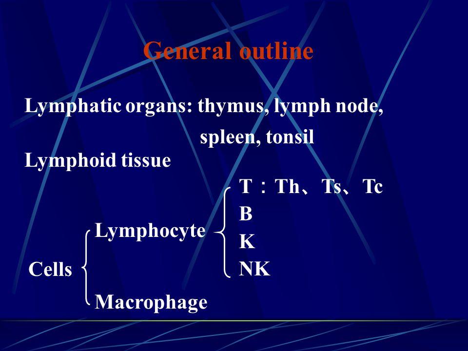 General outline Lymphatic organs: thymus, lymph node, Lymphoid tissue Lymphocyte T : Th 、 Ts 、 Tc B K NK Macrophage Cells spleen, tonsil