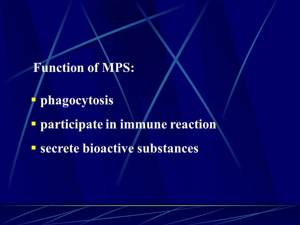 Function of MPS:  phagocytosis  participate in immune reaction  secrete bioactive substances