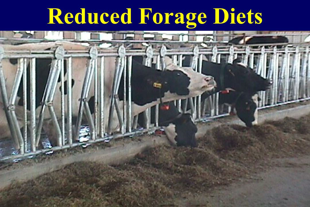 Reduced Forage Diets