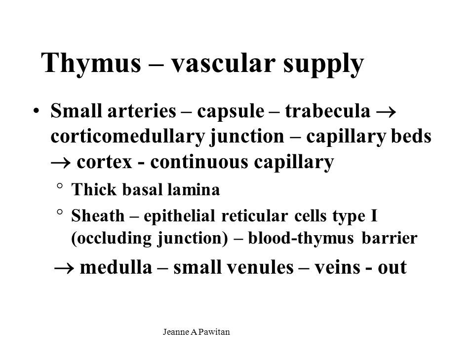 Jeanne A Pawitan Thymus – vascular supply Small arteries – capsule – trabecula  corticomedullary junction – capillary beds  cortex - continuous capillary °Thick basal lamina °Sheath – epithelial reticular cells type I (occluding junction) – blood-thymus barrier  medulla – small venules – veins - out
