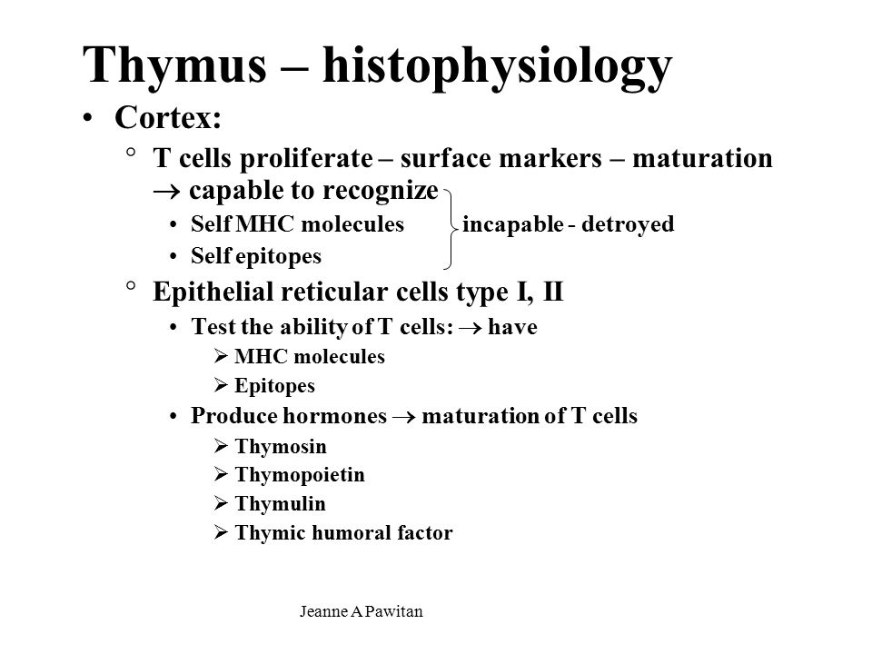 Jeanne A Pawitan Thymus – histophysiology Cortex: °T cells proliferate – surface markers – maturation  capable to recognize Self MHC molecules incapable - detroyed Self epitopes °Epithelial reticular cells type I, II Test the ability of T cells:  have  MHC molecules  Epitopes Produce hormones  maturation of T cells  Thymosin  Thymopoietin  Thymulin  Thymic humoral factor