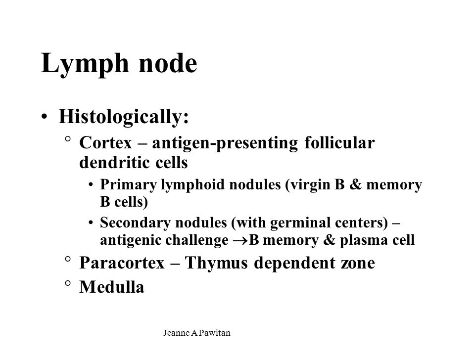 Jeanne A Pawitan Lymph node Histologically: °Cortex – antigen-presenting follicular dendritic cells Primary lymphoid nodules (virgin B & memory B cells) Secondary nodules (with germinal centers) – antigenic challenge  B memory & plasma cell °Paracortex – Thymus dependent zone °Medulla