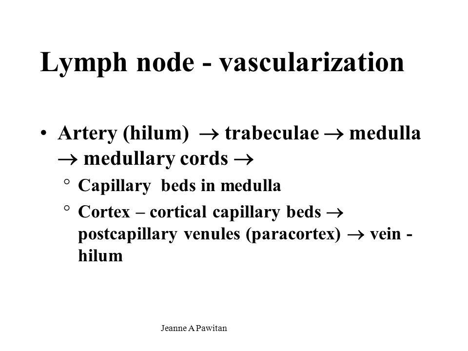 Jeanne A Pawitan Lymph node - vascularization Artery (hilum)  trabeculae  medulla  medullary cords  °Capillary beds in medulla °Cortex – cortical capillary beds  postcapillary venules (paracortex)  vein - hilum