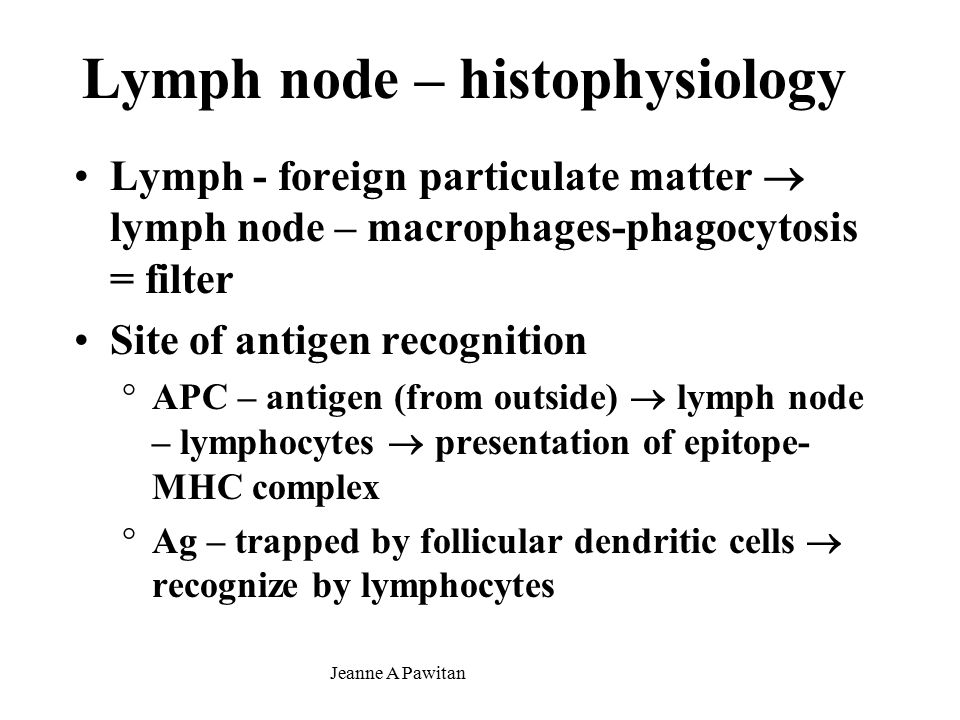 Jeanne A Pawitan Lymph node – histophysiology Lymph - foreign particulate matter  lymph node – macrophages-phagocytosis = filter Site of antigen recognition °APC – antigen (from outside)  lymph node – lymphocytes  presentation of epitope- MHC complex °Ag – trapped by follicular dendritic cells  recognize by lymphocytes