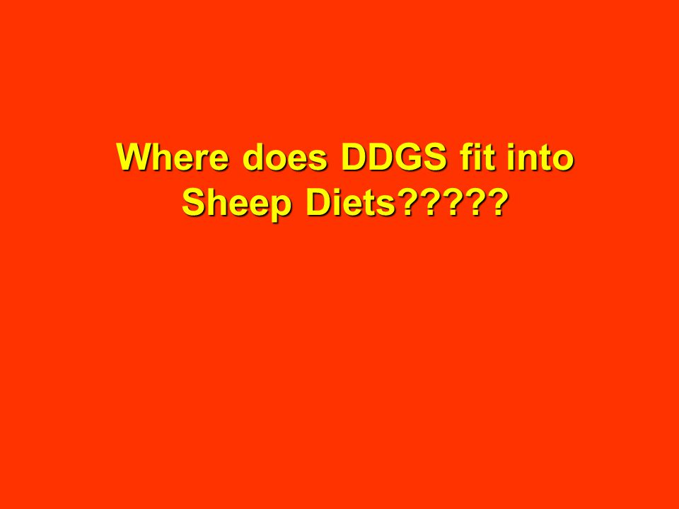 Where does DDGS fit into Sheep Diets
