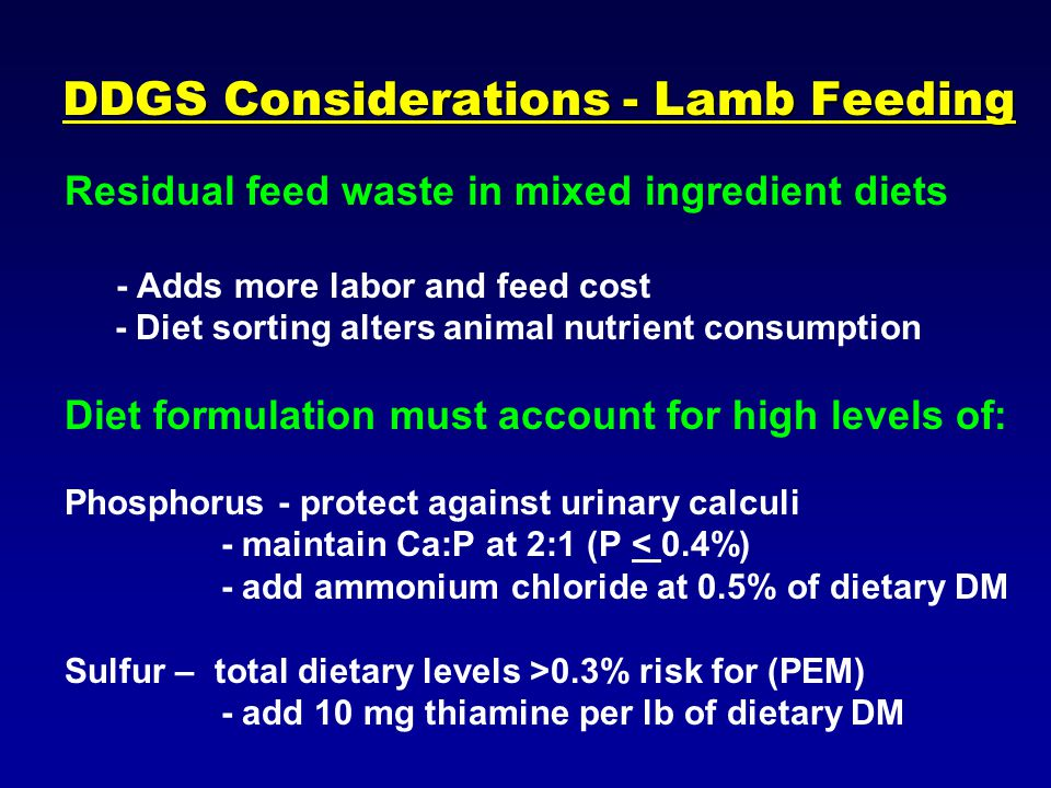 DDGS Considerations - Lamb Feeding Residual feed waste in mixed ingredient diets - Adds more labor and feed cost - Diet sorting alters animal nutrient consumption Diet formulation must account for high levels of: Phosphorus - protect against urinary calculi - maintain Ca:P at 2:1 (P < 0.4%) - add ammonium chloride at 0.5% of dietary DM Sulfur – total dietary levels >0.3% risk for (PEM) - add 10 mg thiamine per lb of dietary DM