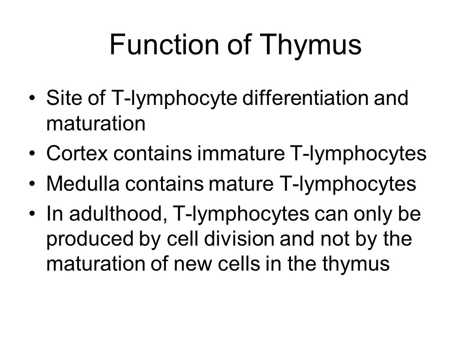 Function of Thymus Site of T-lymphocyte differentiation and maturation Cortex contains immature T-lymphocytes Medulla contains mature T-lymphocytes In adulthood, T-lymphocytes can only be produced by cell division and not by the maturation of new cells in the thymus