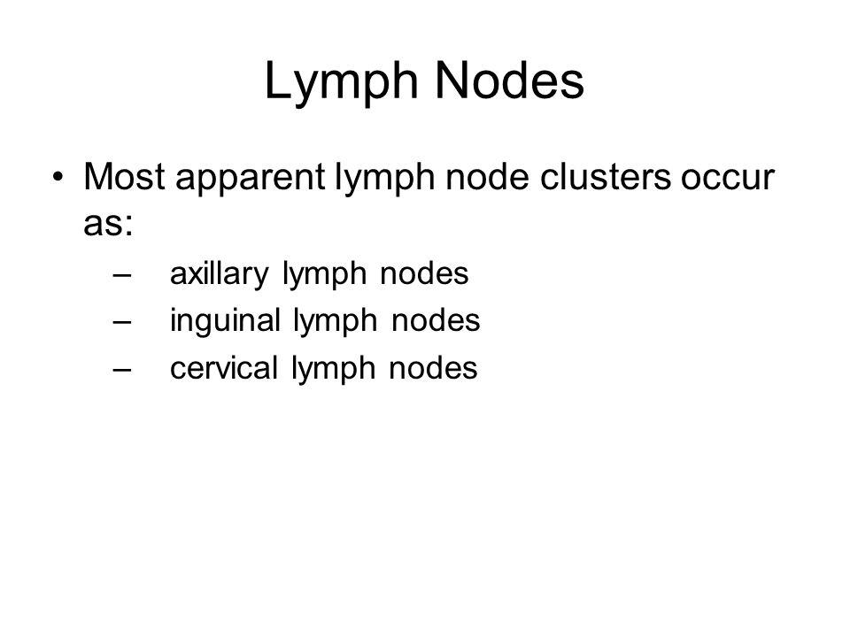 Lymph Nodes Most apparent lymph node clusters occur as: –axillary lymph nodes –inguinal lymph nodes –cervical lymph nodes